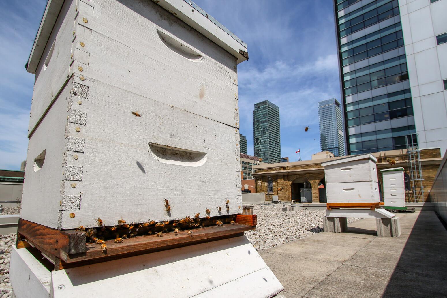MaRS_Toronto_Killer_Spaces_Techvibes-3